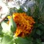 Plants_072