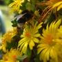 Bee hard at work pic 1