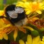 Bee hard at work pic 2