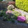 My friends lovely front garden