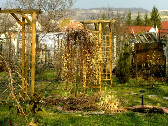 Top garden at back