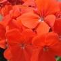 Close up flower pictures (Close up flower pictures)