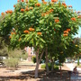Balboa_park_and_misc._plant_pics_021