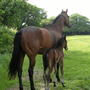 Mare_and_foal_2
