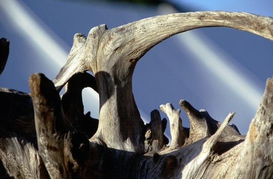 Copy_of_natural_driftwood_sculpture.jpg