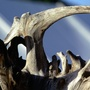 Copy_of_natural_driftwood_sculpture