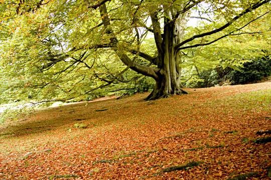 Chatsworth in the Autumn (Strideusinthecoldus)