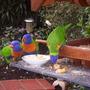 Pretty_birds_005