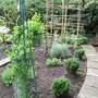 herb and fruit garden