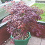 Plants_001
