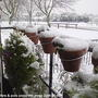 Conifer_on_balcony_covered_in_snow__2009-02-05_002.jpg