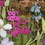 gardening_scotland_09__56_.jpg