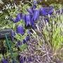 gardening_scotland_09__68_.jpg