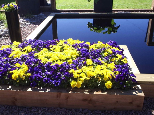 Cool Pool and Pansies - Gardening Scotland 2009