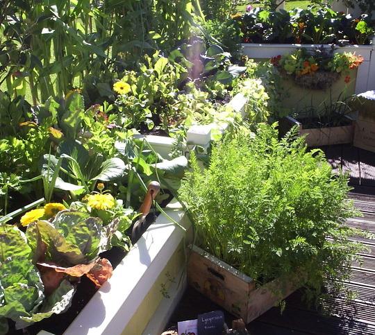 """Planting in the """"Credit Munch"""" Garden - Gardening Scotland 2009"""