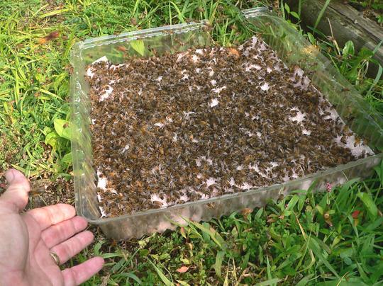 Feeding the Honey Bees