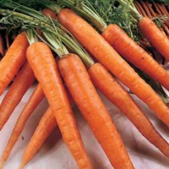 Tendersweet carrots (Daucus carota (Carrot))