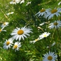 Wildflowers_Hanworth_2.jpg