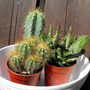 "My New Cactus ""Blog"""