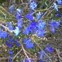 Spring_flowers_075