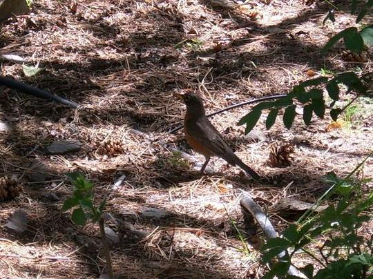 Bird_in_the_woods.jpg