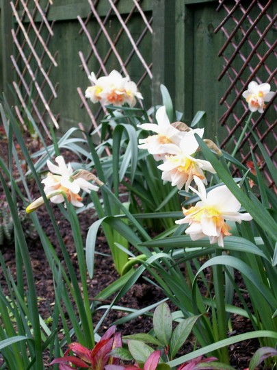 right hand bed (narcissus replete)