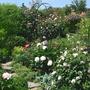 Garten09