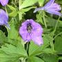 A_lavender_form_2.6.9_c