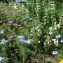 In_the_gravel_garden