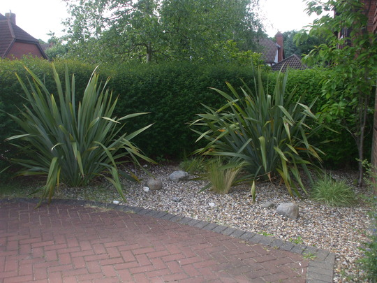 Our tiny front garden! (Phormium tenax (New Zealand flax))