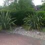 Our tiny front garden! (Phormium tenax (New Zealand flax))