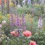 Garden View  (Delphinium elatum (Delphinium))