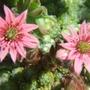 Cobweb flowers