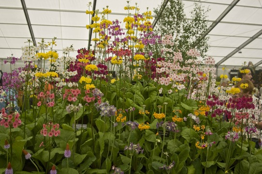 Flower Display Blooms Garden Festival