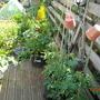 decking veggies