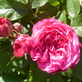 Late_spring_goy_09_017