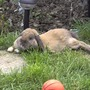 gerry sunbathing