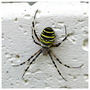 Spider on the Plant Pot