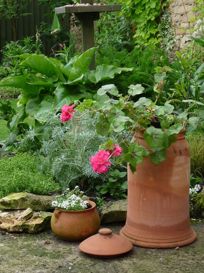 Still using my Rhubarb pot....:o)
