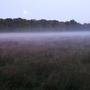 Autumn mist rising
