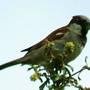 Mr_sparrow3