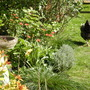 Garden with chicken