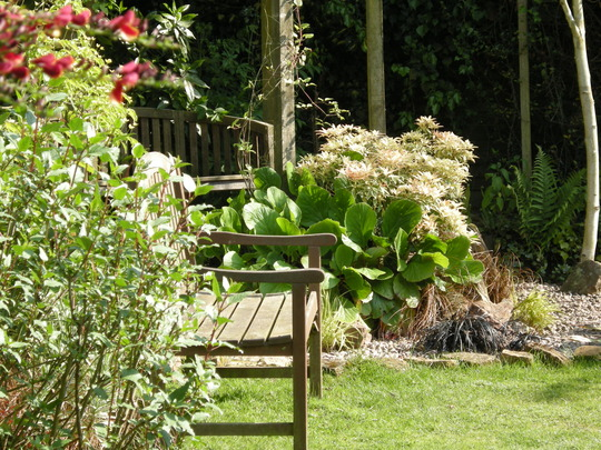 A place to sit (Pieris japonica (Lily of the valley bush))