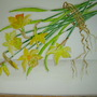 Spring_flowers_fordham_005