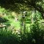 Garden_may_09_009