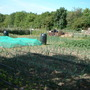 Allotmentjune09_002