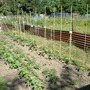 Flower bed down on the allotment
