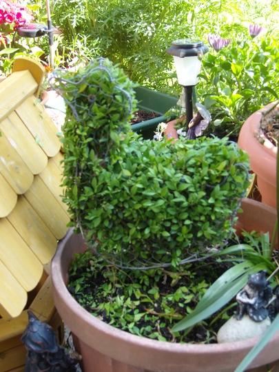 My Topiary Duck.............