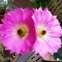 Cactus_floer_9_06_09_3