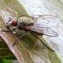Fly_9_06_09